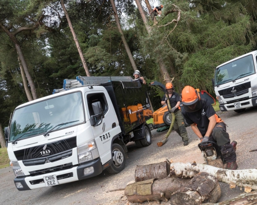 Tree Surgeons branch out with more Canters